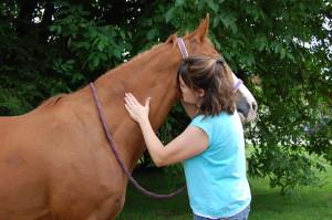 Untersuchung des Halses in der Pferdephysiotherapie