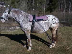 biko® Pferdeexpander - geeignet für jedes Pferd!